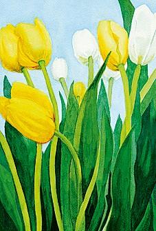 Tulipes blanche et jaune